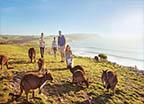 Kangaroo Island Australian island with diverse wildlife Read More